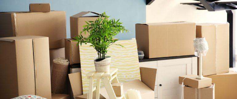 Hausrat-gestapelt-in Wohnung-Kisten-Pflanzen
