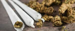 Gedrehte Marihuana-Zigaretten