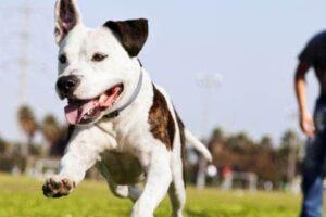 Hund spielt auf einer Wiese ohne Leine
